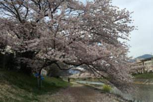 一目惚れの出会いーー私と京都
