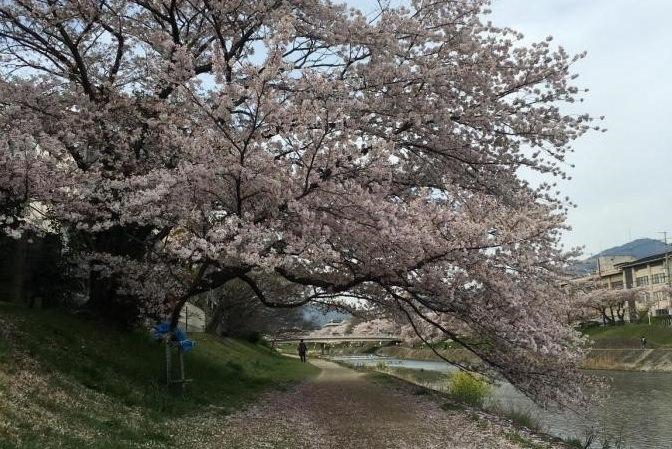 一见钟情的邂逅——我与京都